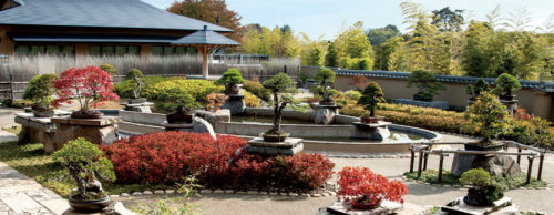 bonsai-higashiyamatakuto-matsukonosiranaisekai