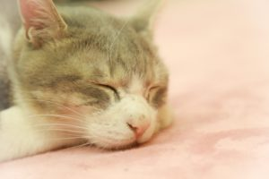cathouse-tokotonhorisagetai-ikimononisankyu