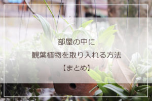 おすすめ記事一覧観葉植物