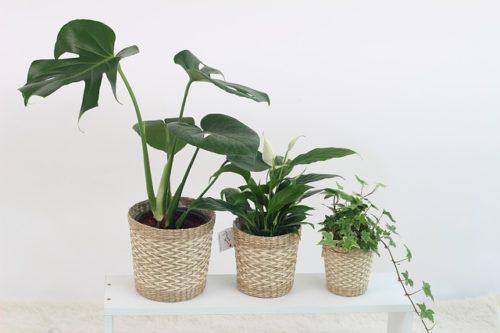 plant-rental-merit-demerit